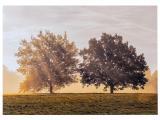 Cart Glückwunschkarte Bäume