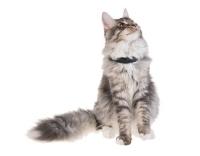 petTracer Katzen-GPS-Ortungsgerät