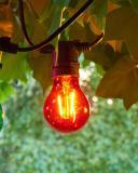 Sirius LED Leuchtmittel Tobias Rot